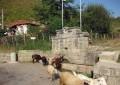 Градът: Село Добротино