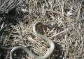 ГРАДЪТ: СКАНДАЛНО! Змии плъзнаха в двора на детската градина в Копривлен!